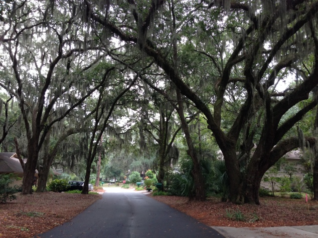 Live Oaks line the roads in Sea Pines